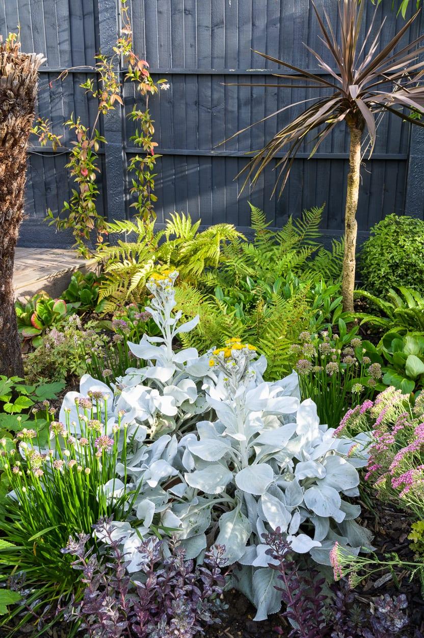 Stachys and ferns John & Ant - Essex Urban Garden Design