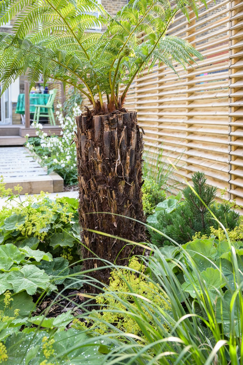 architechtural planting ED286 - Sanctuary Garden Design in London
