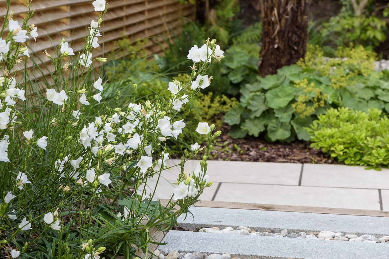 border planting ED286 - Sanctuary Garden Design in London