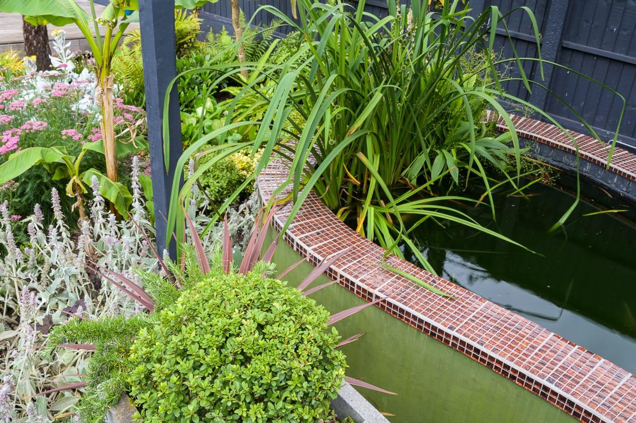 carp pond John & Ant - Essex Urban Garden Design