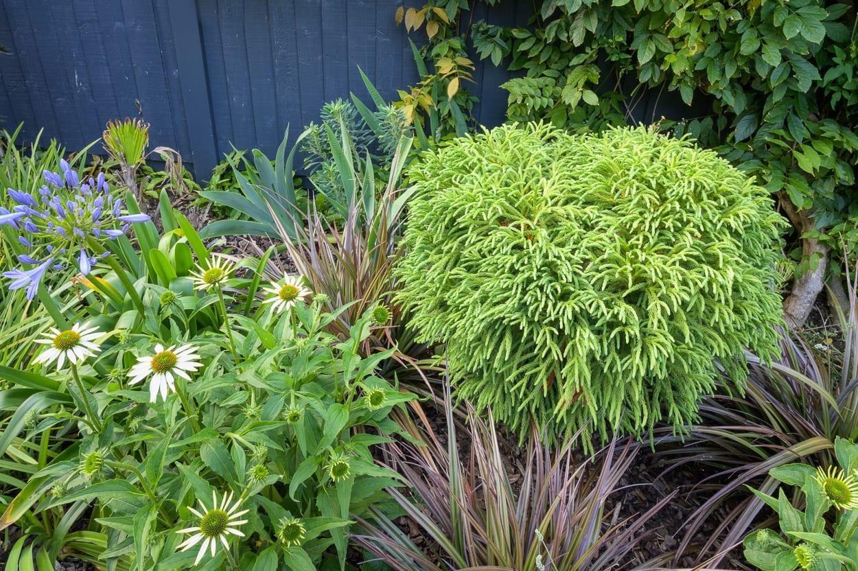 foliage border John & Ant - Essex Urban Garden Design