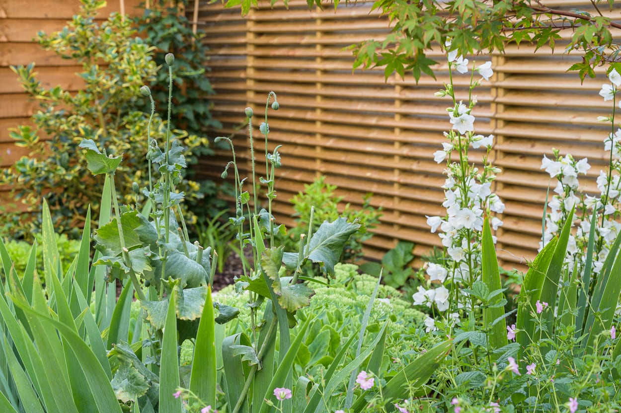 perfect border planting ED286 - Sanctuary Garden Design in London